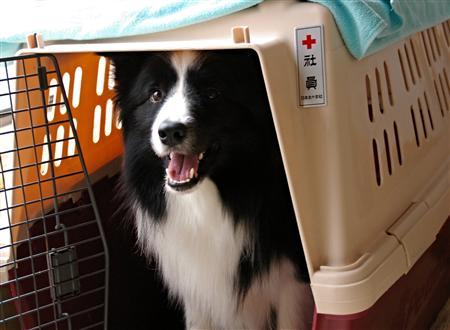 帰宅した夫もステッカーを見て、赤十字社が社員にくれたの?とかいってましt( ̄∇ ̄;)