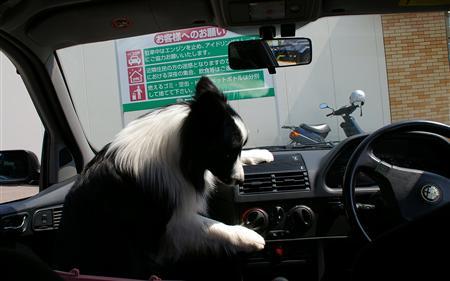 お車、暑くないですか〜?