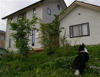 ウシ犬です。草をいっぱいお食べ〜