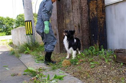 これは ダセ で草を出したところかな?いい子なんだか困ったさんなんだかわかりま仙台。