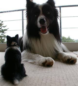 このまま動かないんですよ〜モデル犬いける?!(無人撮影専門犬。ニーズなし。)