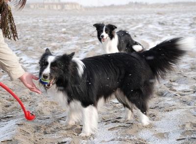 砂浜が凍っているよ〜