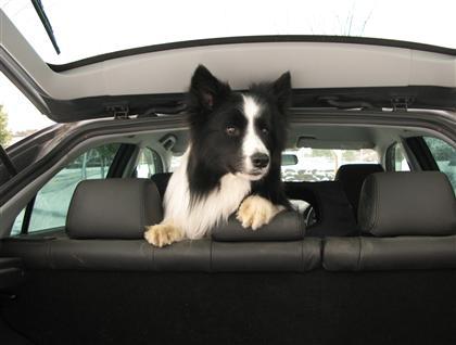 車内フリーなのではなく、(いつもはフタ付き)ソフトクレートに入っております