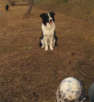 こんなだけど、サッカーやるとなると飛んできます(^_^;)