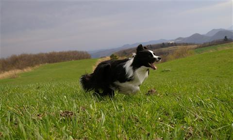草をむしゃむしゃ食べたり、走ったり☆