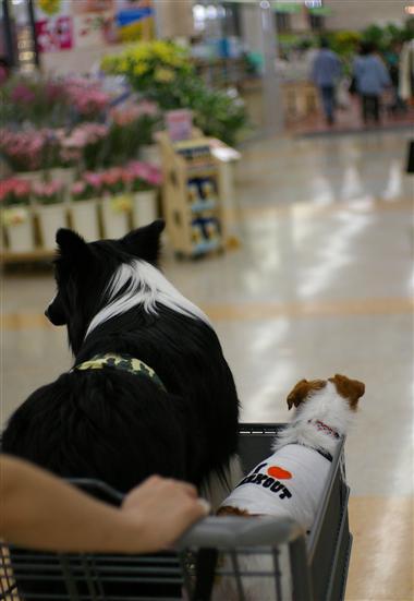 犬連れで入店しちゃうと、お買い物はままならんね・・・