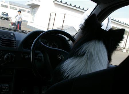 絶対助手席じゃなく、運転席で待ってます。