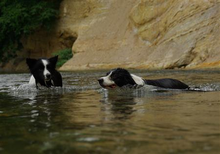 「こう泳ぐのだぞ」 「あい。」