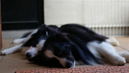写真バシャバシャ撮られても、ぐーっすり寝ております(^_^;)