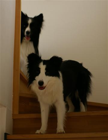 階段は降りないのね(^_^;)