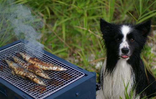 社員さんは肉より魚派♪