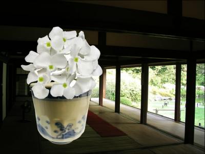 ajisaishiro.png