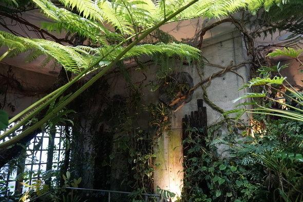 兵庫県立淡路夢舞台温室【奇跡の星の植物館】シダルーム