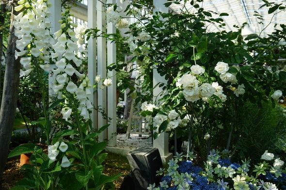 兵庫県立淡路夢舞台温室【奇跡の星の植物館】結婚式・ウェディング