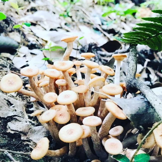 初秋 きのこ 林立