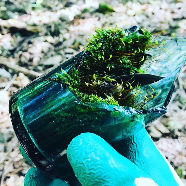 古いガラス瓶 苔