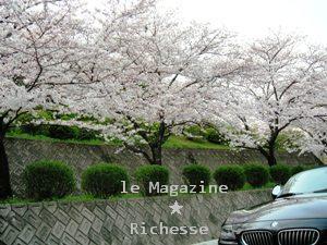 sakura-2009_002