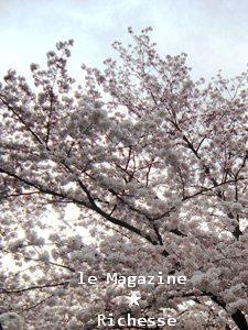 sakura-2009_005