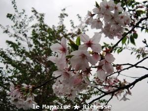 山崎川さくらle14avril2009-03