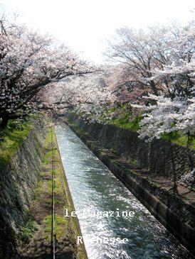 琵琶湖疏水2009-001