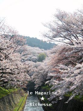 琵琶湖疏水2009-003