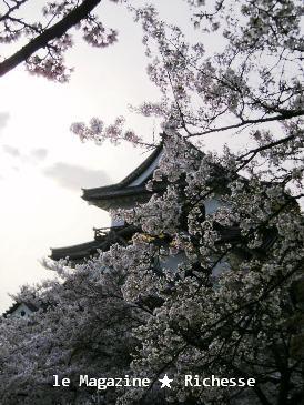 彦根城桜2009春002