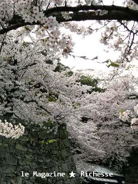 彦根城桜2009春003