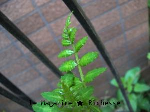 my garden-le21avril09-02