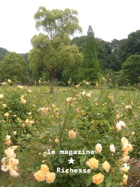 花フェスタle28mai2009 001