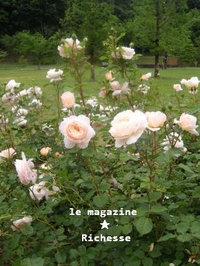 花フェスタle28mai2009 003
