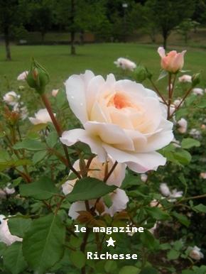 花フェスタle28mai2009 004