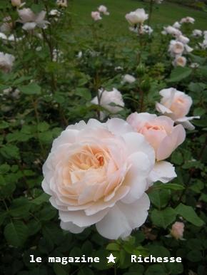 花フェスタle28mai2009 005