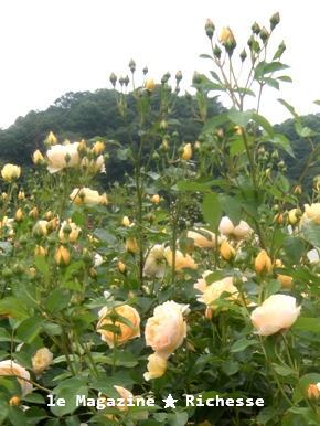 花フェスタle28mai2009 007