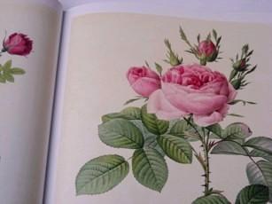 Book Les Roses2008 002