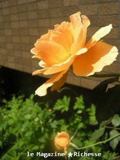 MyGardenCourt_le27juin2009Richesse6