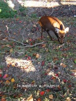 奈良荒池の鹿2009-02