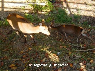 奈良荒池の鹿2009-03