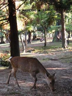 奈良春日大社の鹿2009-01