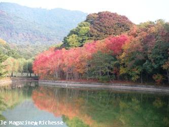 奈良公園荒池2009_02