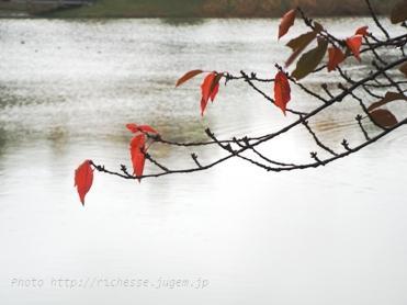 杁ヶ池2009秋01