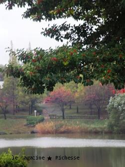 杁ヶ池2009秋05