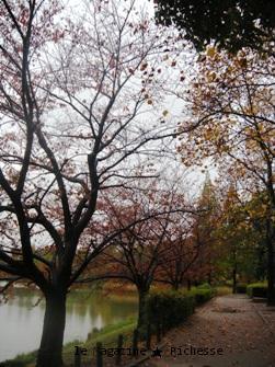 杁ヶ池2009秋06