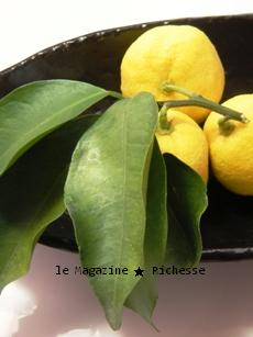 le16dec09kitchen_Citrus junos 02