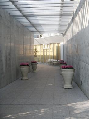 clematis Garden Area