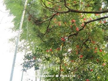 竹と椿(有楽苑)02