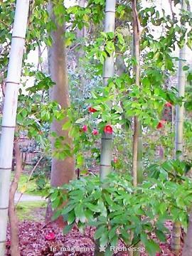 2010弥生 犬山有楽苑(竹と椿)