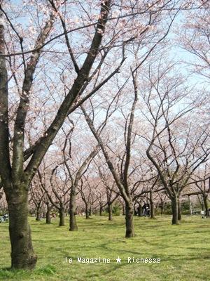 le30mars2010-さくら-平和公園00