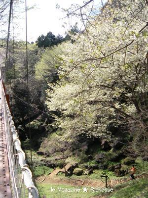 駿河平自然公園