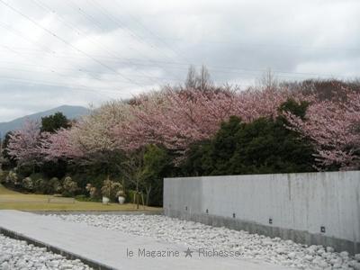 クレマチス・ガーデン/ヴァンジ彫刻庭園美術館(クレマチスの丘)