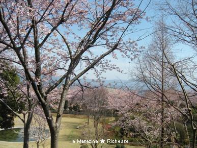 リストランテ「プリマヴェーラ」から望む桜